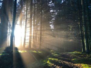 sunlight piercing on trees during daytime